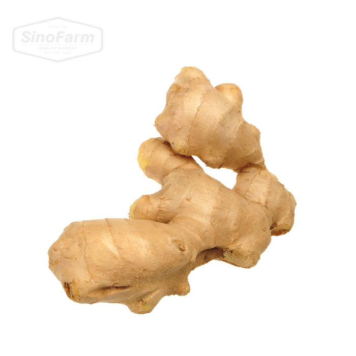 Fresh dried ginger price per kg dry ginger Chinese adrak low price new crop high quality ginger fresh for wholesale