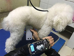 ultrasound diagnostic equipment portable veterinary ultrasound machine