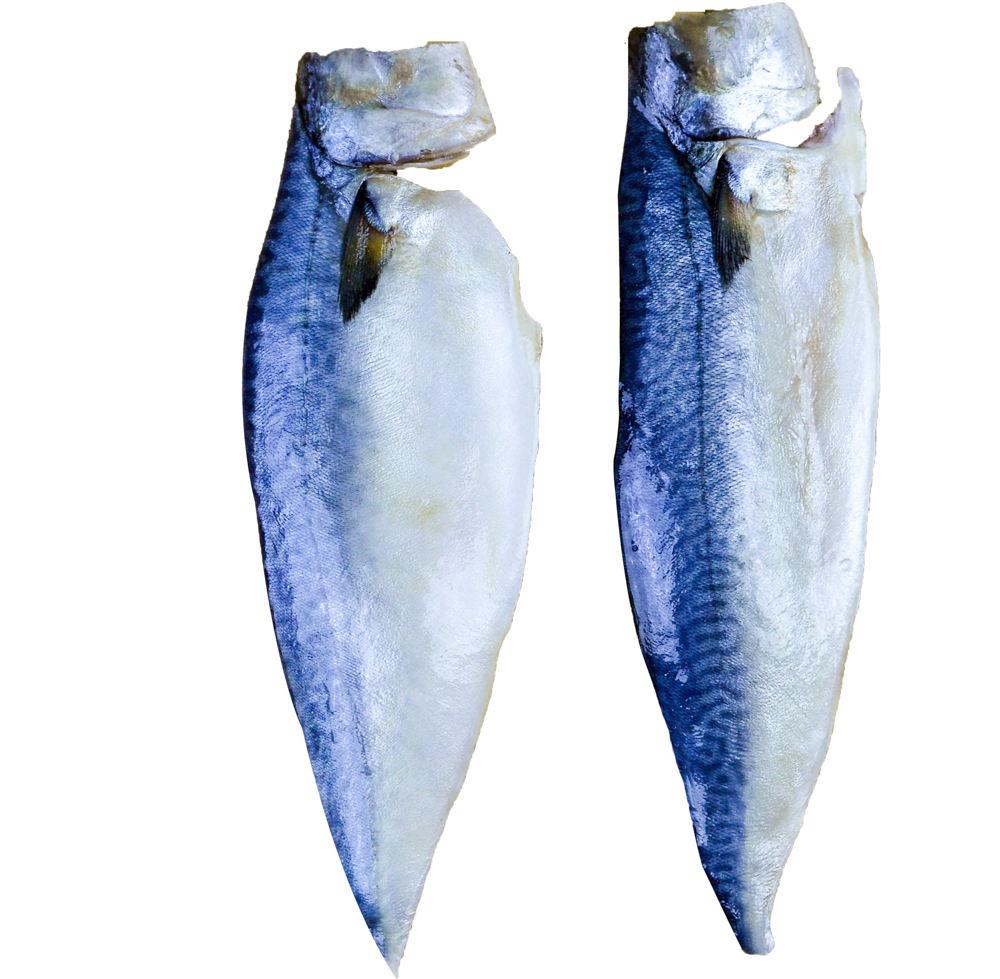 Sea fish filé de cavala pacífica mar peixe filé de cavala pacífica