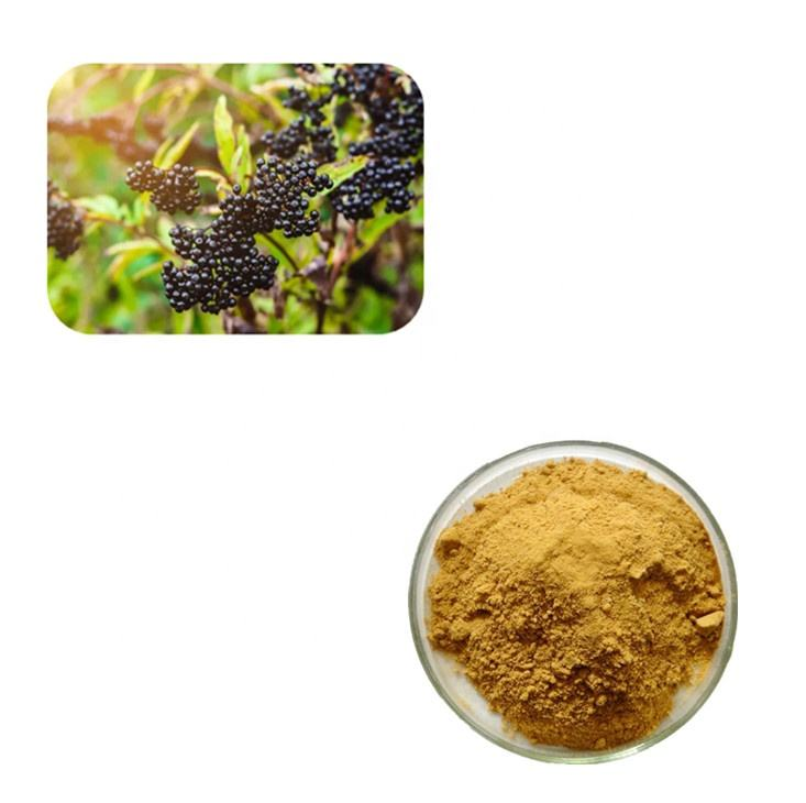 Hot Sales Elderberry Extract Fruit Powder 10 1 with Favorable Price