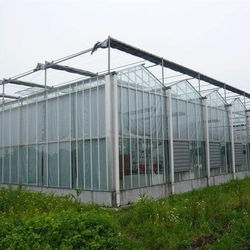 venlo glass  steel structure wide span greenhouse