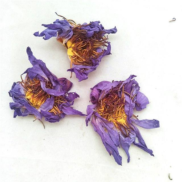 Lan lian hua wholesale Factory Supply dried Blue Lotus flower