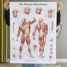 90x60cm Educational Anatomy Human Musculature System Medical poster Home Decor Wall Hanging Silk