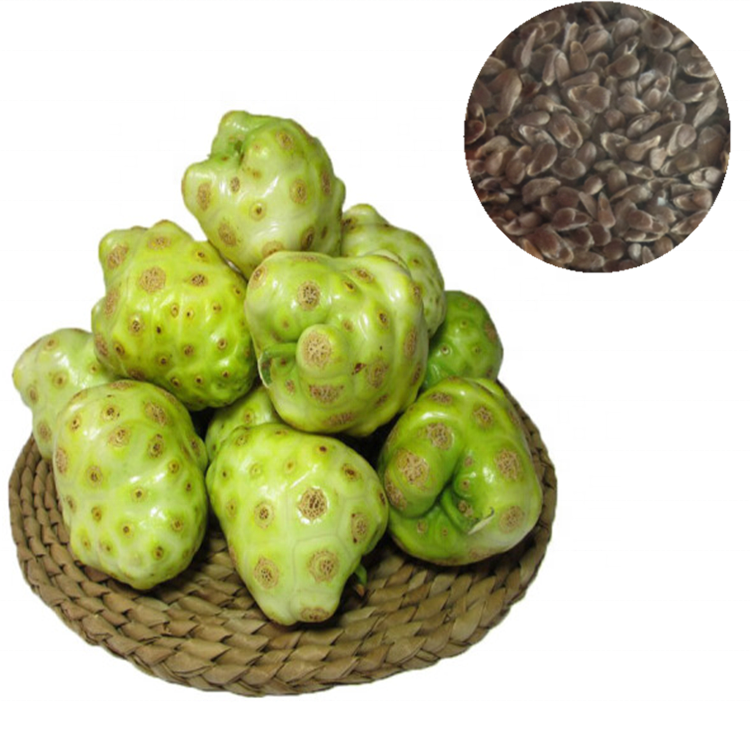 Chinese Noni Fruit seeds/Morinda citrifolia seeds for growing