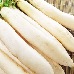 (HOT) White Radish/Professional export South Korea, Japan, Malaysia, Singapore