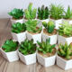 Wholesale Small Artificial Plants Potted Succulents for Desk Decoration