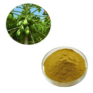 GMP Fabriek Levering Carica Papaya Leaf Extract van Top Kwaliteit