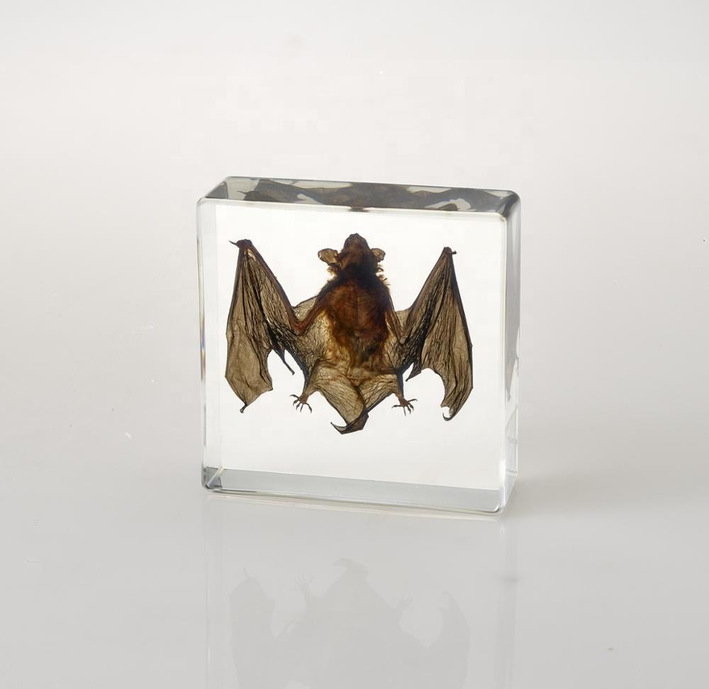 Crystal Injection Box Transparent Resin Bat Animal Insided Teaching Embedded Specimen