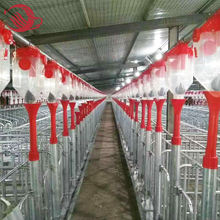 Modern Building Pig/Swine/Hog Farming Auto Equipment Turn-key Project Supplier / Pig Stall