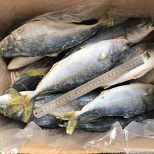 Wholesale Frozen Yellowtail Fish  Yellowtail Scad WR size 500-800g