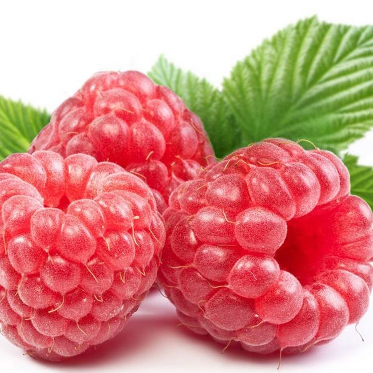 Fu Pei Zi Kruiden Therapie Fruit Raspberry