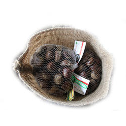 10Kg chestnut supplier in india