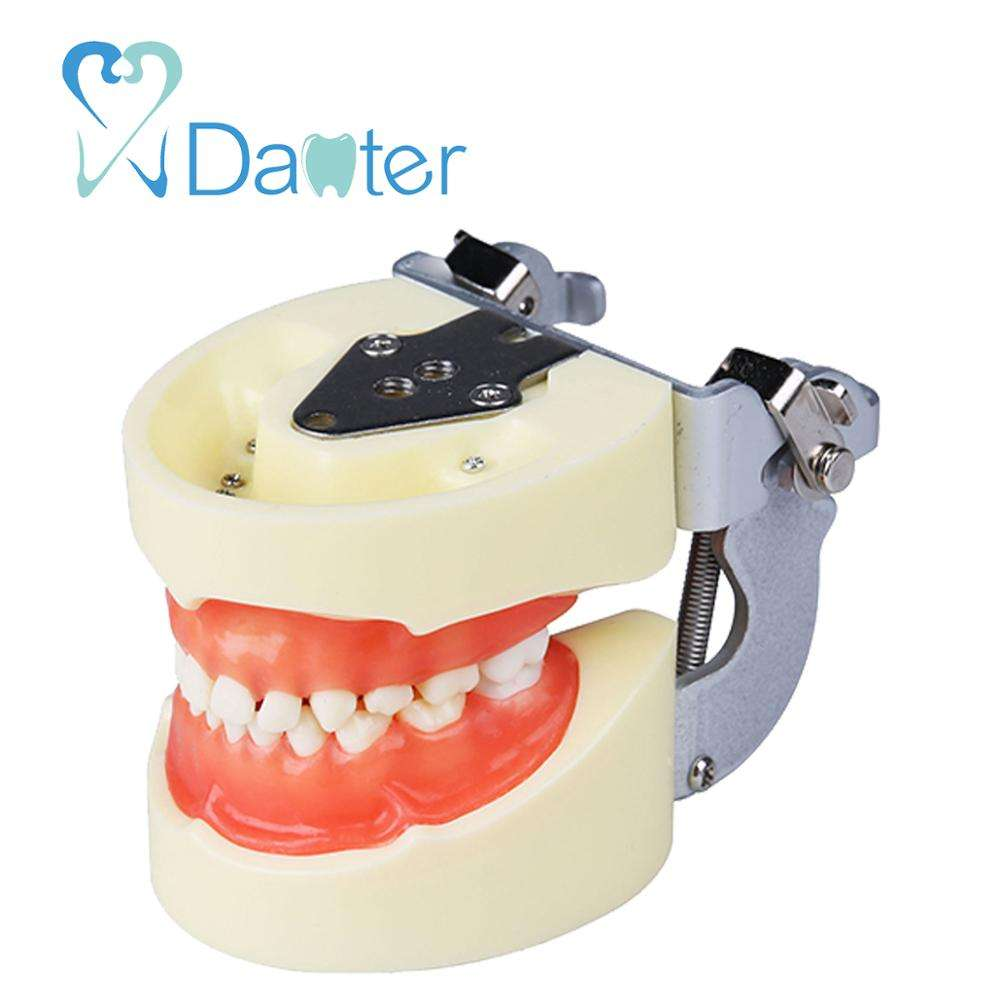 6 jahre alten Dentition Dental Pedo Model Dental Pediatric Soft Gingiva Jaw Model mit 24pcs Replacement Pedo Teeth