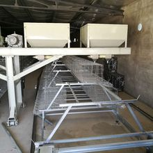 Poultry farm equipment automatic 2 tiers broiler breeder chicken battery cage system for sale