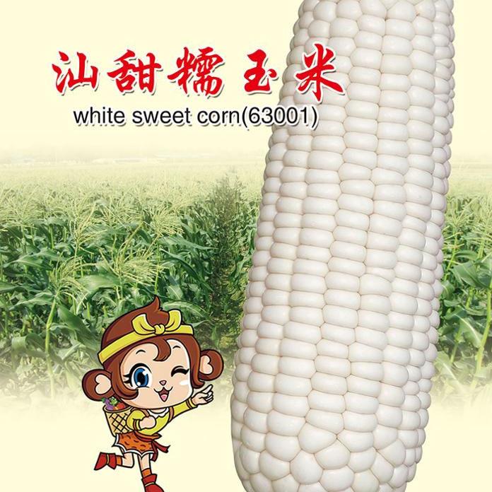 Высокая урожайность тепла и холода купить онлайн Гибридный белый восковой кукурузы семян