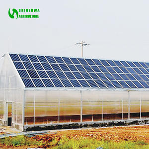 Commercial Solar Hydroponic Nursery Greenhouse with lettuce growing system