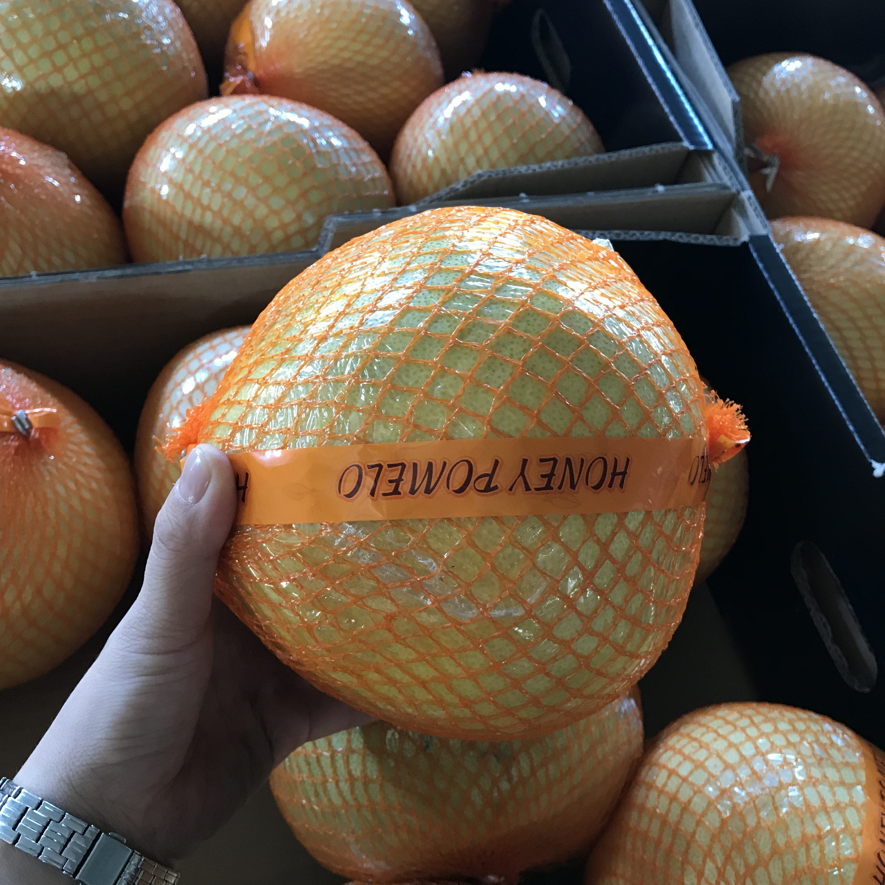 good quality Honey Pomelo export to Europe