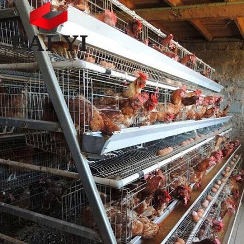 2019 Hot Selling Layer Egg Chicken Cage/ Poultry Farm House Design