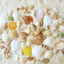 Wholesale white natural decorative Craft Sea shells for Home Decoration