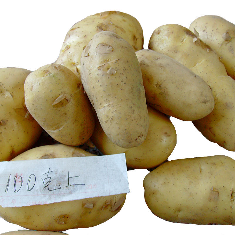 Sweet bulk cheap fresh potato