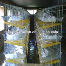 rabbit breeding
