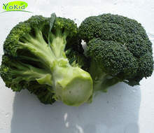 Hot Sale China Cleaning Fresh Broccoli Green With Lower Price