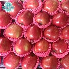 18kg carton Gala Apple