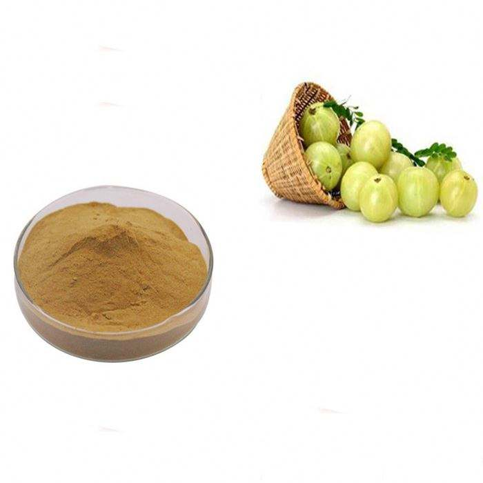 High quality 30%~40% Emblic (Fructus phyllanthi) Extract, polyphenol phyllanthus emblica fruit extract