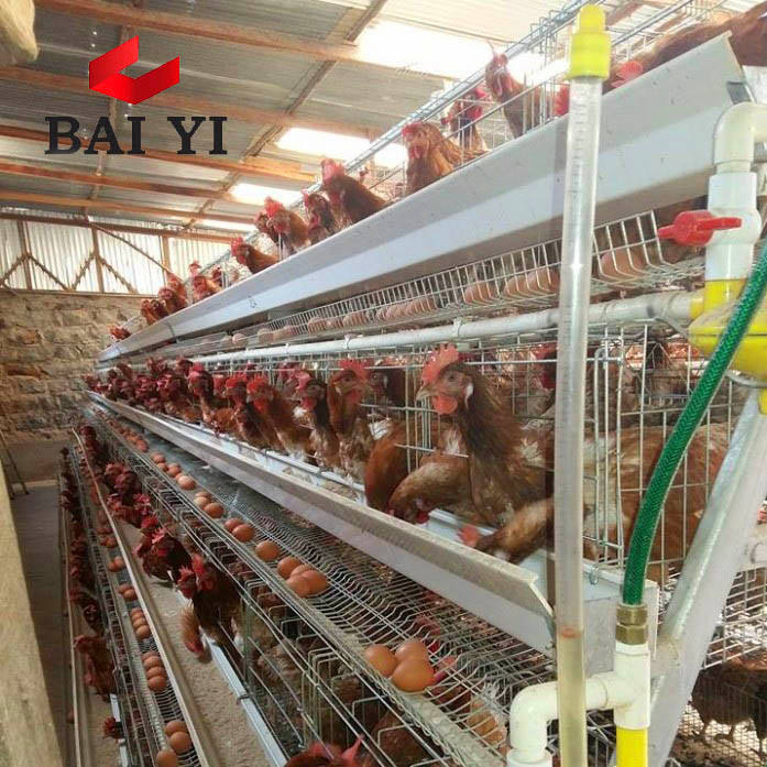 Alibaba Trade Assurance Poultry Farm Equipment Used Chicken Cages for Sale