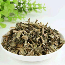 Yi Mu Cao China Supplier Herba Leonuri High Quality Motherwort Natural Wild Leonurus