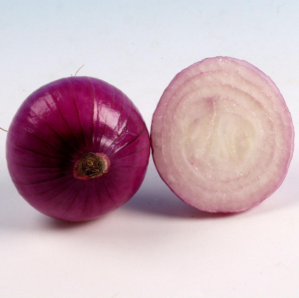 buy onion red onion importers