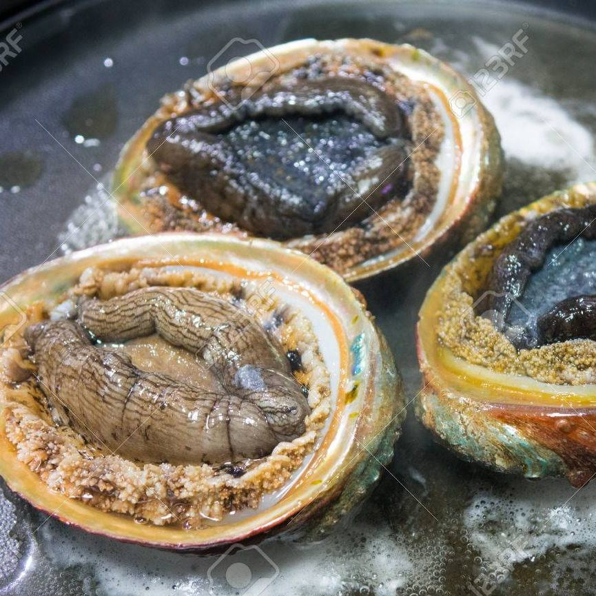 Good quality hot sale fresh frozrn half shell abalone
