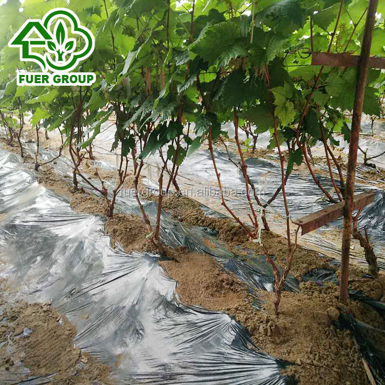 Grapes growing tunnel greenhouse customized color and size PE film greenhouse tunnel