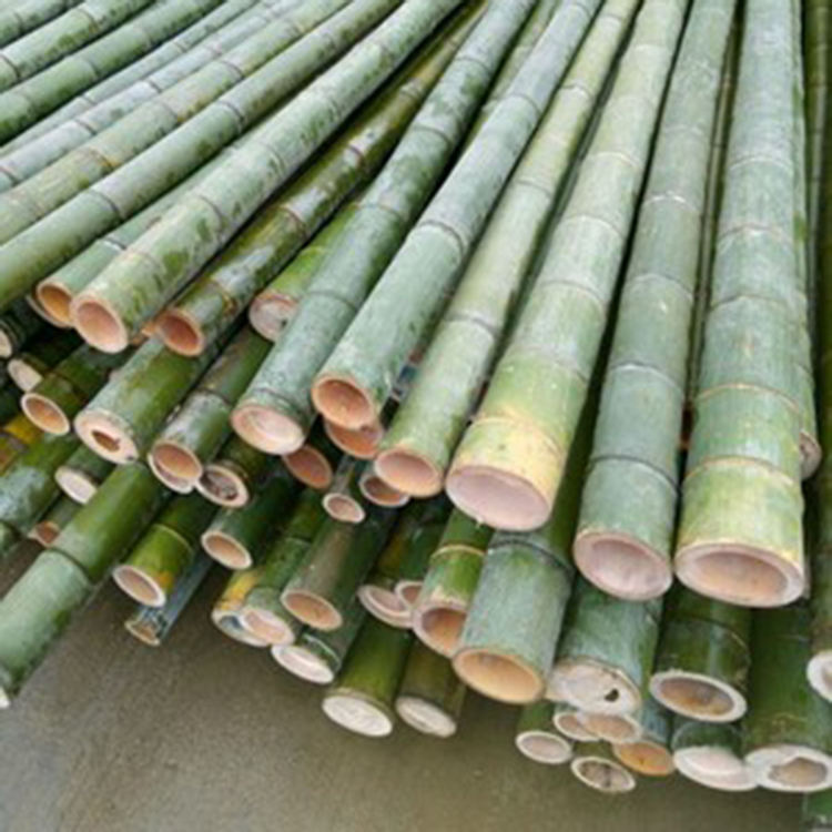 High Quality Bamboo Material Stakes Bamboo Poles Moso Treated Artificial Raw Bamboo Poles