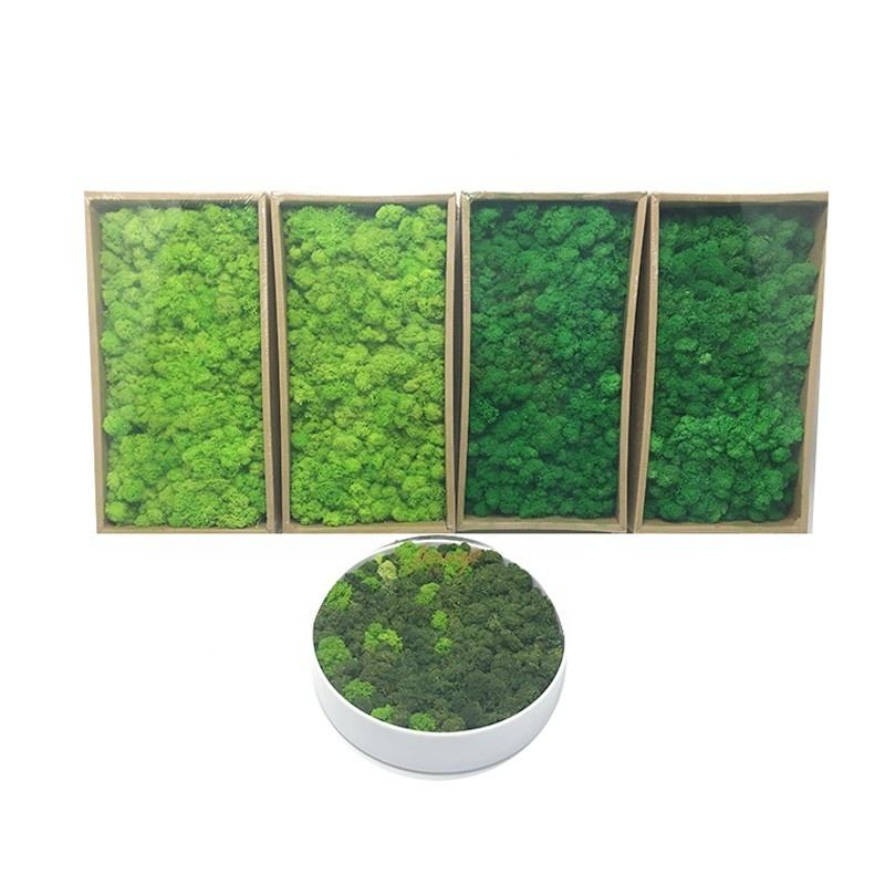Stabilized Preserved Reindeer Moss Office Decoration