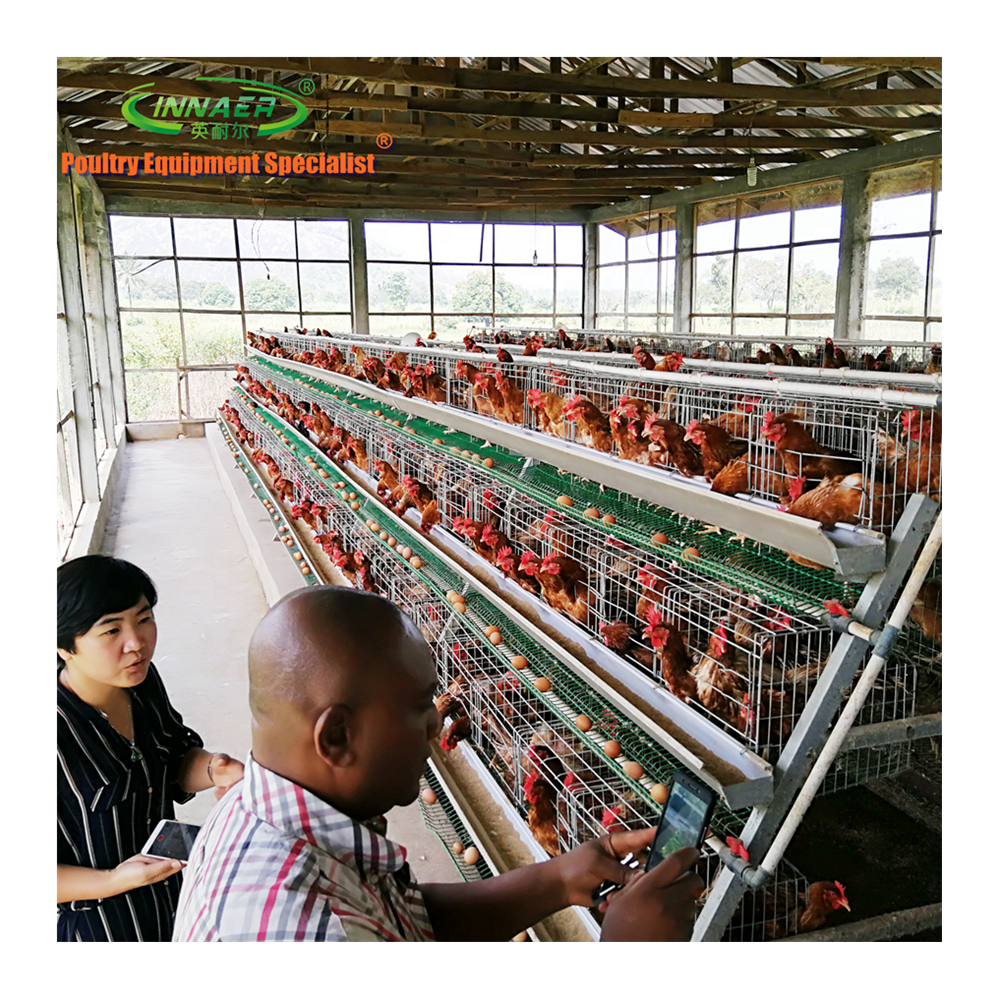 automatic poultry layer cages