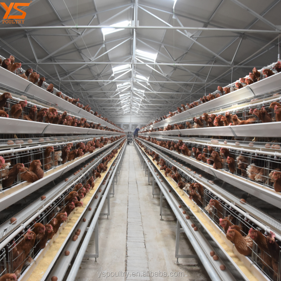 Farm Equipment Big Discount A Type cage design for egg laying chicken