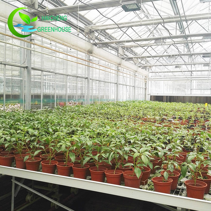 Greenhouse Greenhouse 2018 New Glass Frame Mushroom Agriculture Greenhouse