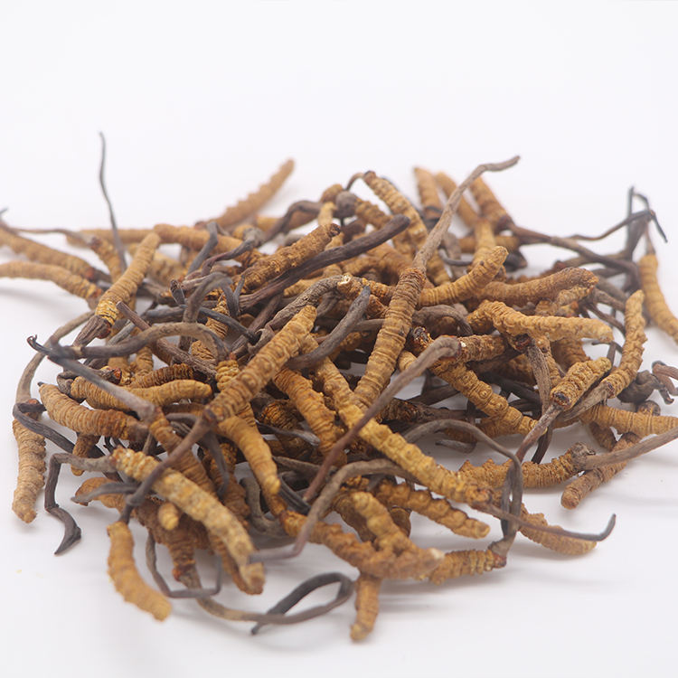 Supply 100% Alami Baku Herbal Cina Aweto Cordyceps Militaris Bubuk