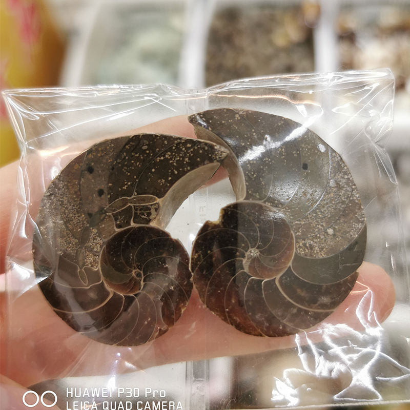 3-5CM Wholesale Natural Ammonite Fossils Jade Madagascar Conch Fossils Slices Conch Shell for Decor