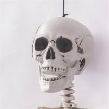 High Quality Halloween Decoration 165cm 5.4 Feet Halloween Life Size Skeleton