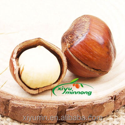 new corp high quality cultivation direct roasted cheap hazelnuts price from Ningxia Chinese