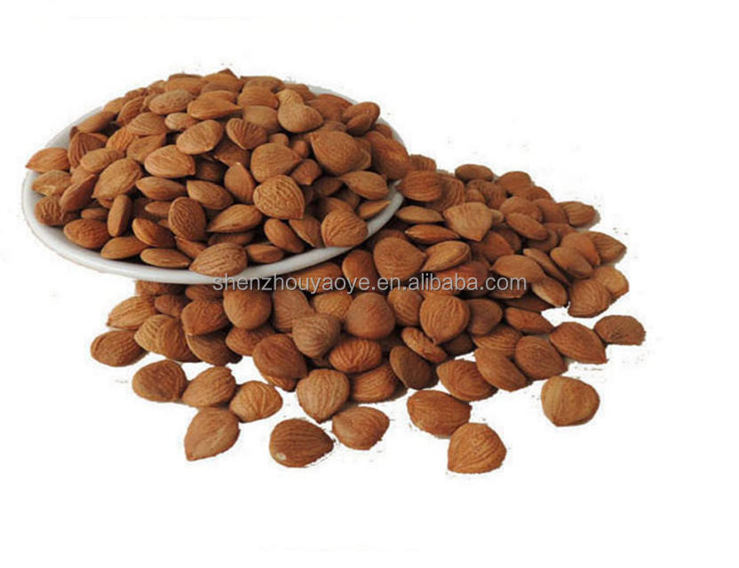 Bulk Organic Chinese Bitter Apricot Kernels for cancer treatment with B17
