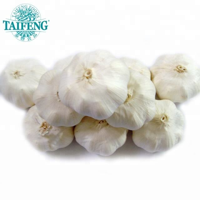Chinese fresh normal white garlic good price