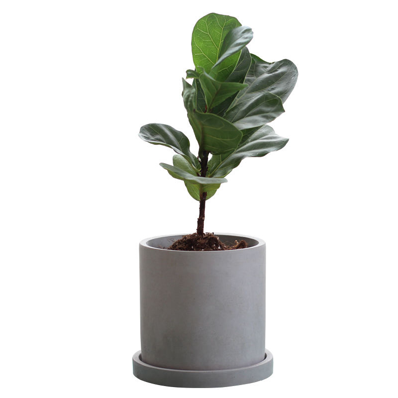 Cylinder cement/concrete flower pot dark grey color with saucer for green plant home decor