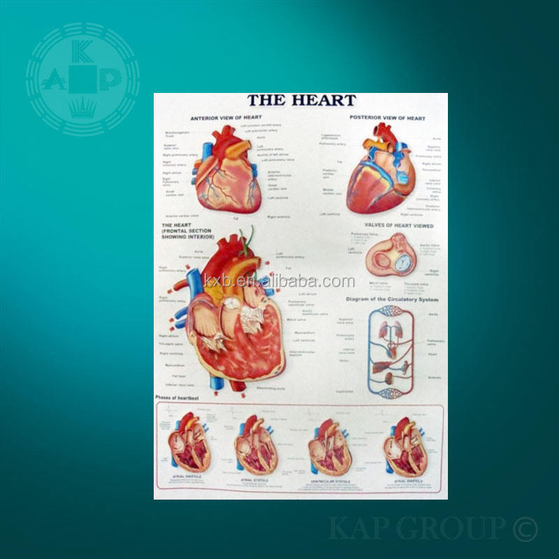 Anatomical chart, 3d heart poster, UV print anatomy of the heart 3d poster