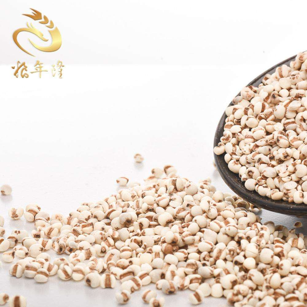 New Crop Wholesale Chinese Job's Tear organic protein rich malt barley