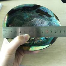 Factory directly sales big polished abalone shell natural in stock with good price