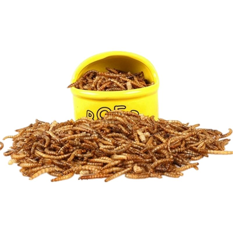 12.5kg Quality Dried Mealworms (12.55kg, 10kg, 5kg, 2.55kg) Bulk Buy discount!