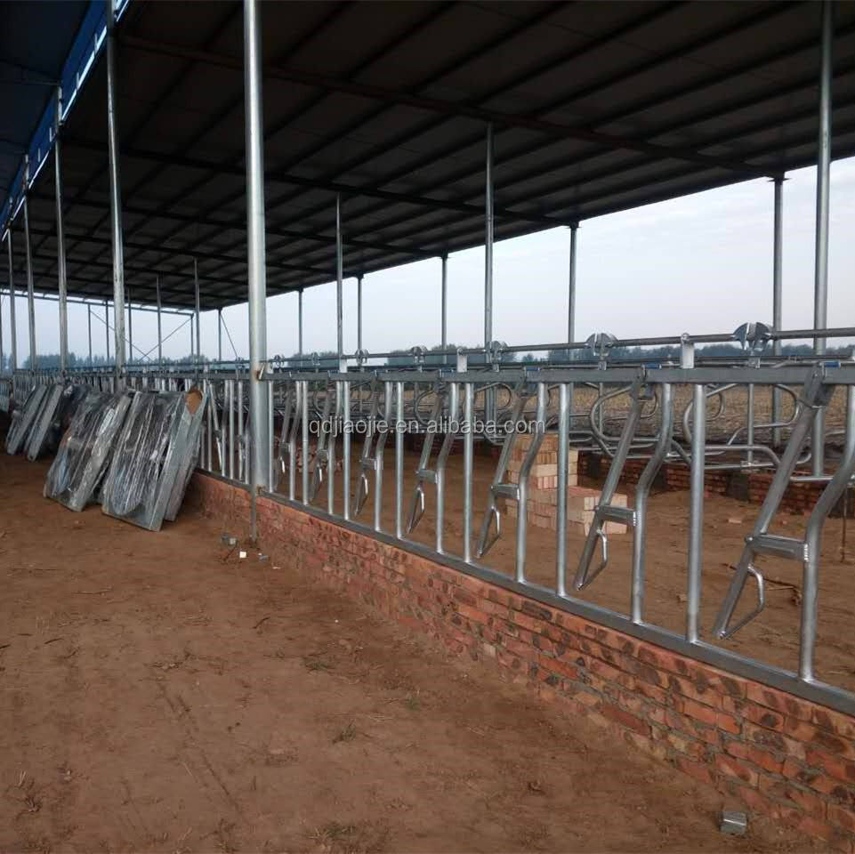 Cattle Cow Headlock and Cow Free Stall for dairy cow farm equipment